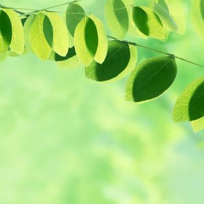 No se mueve ni una hoja de un rbol sin que dios lo for El arbol que no tiene hojas