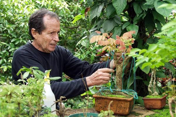 Adelantan talleres de jardiner a e hidrop nicos noticias for Jardineria santander
