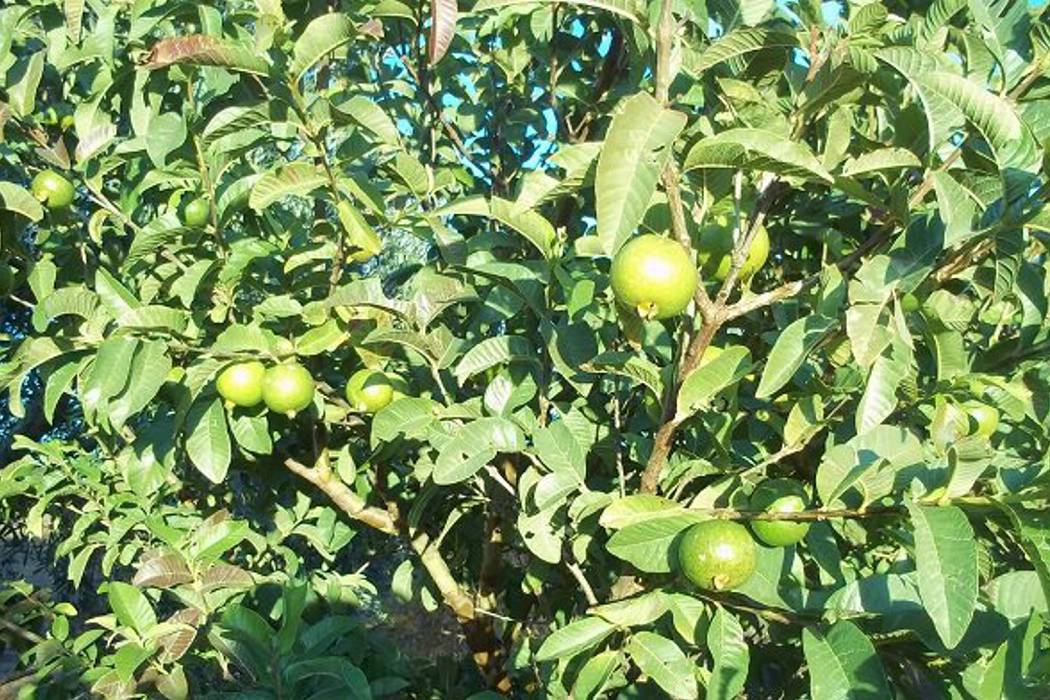 Sequía está afectando cultivos, afirma la alcaldesa de Vélez