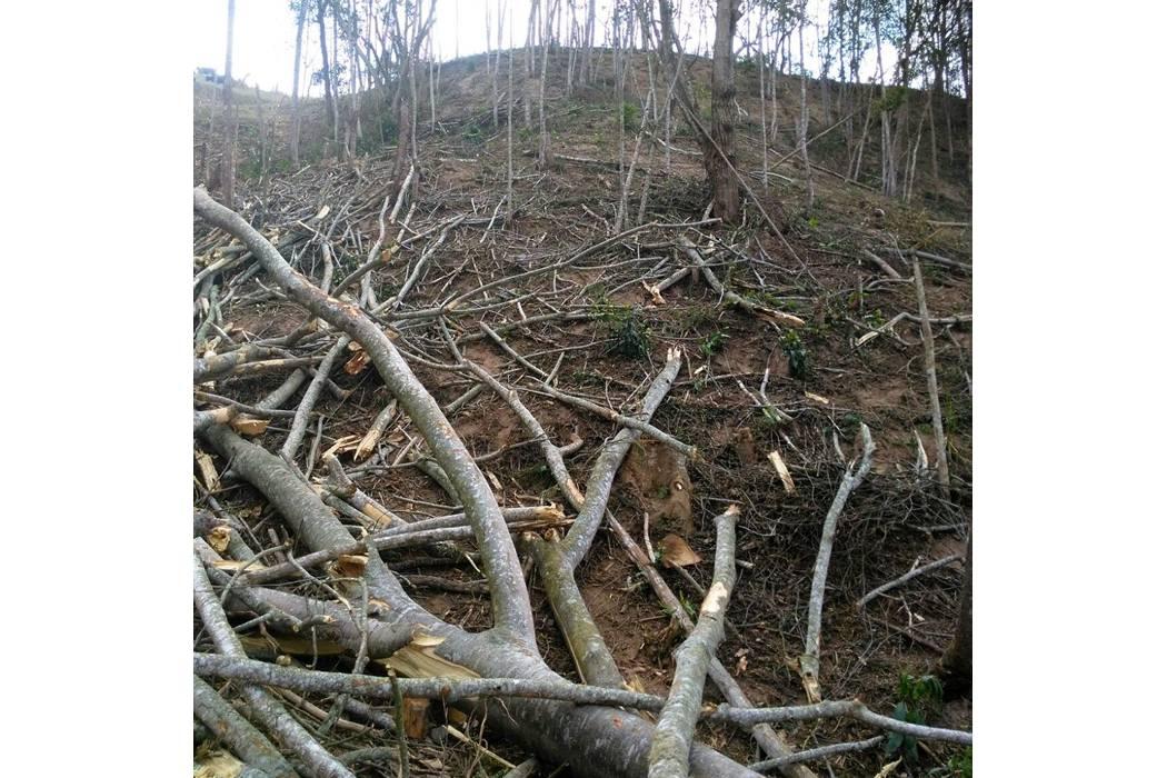 Tala de árboles generó afectación en Lebrija