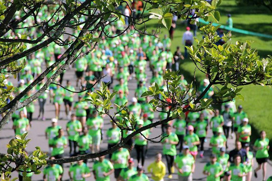 La carrera verde busca la unidad a favor de los bosques colombianos