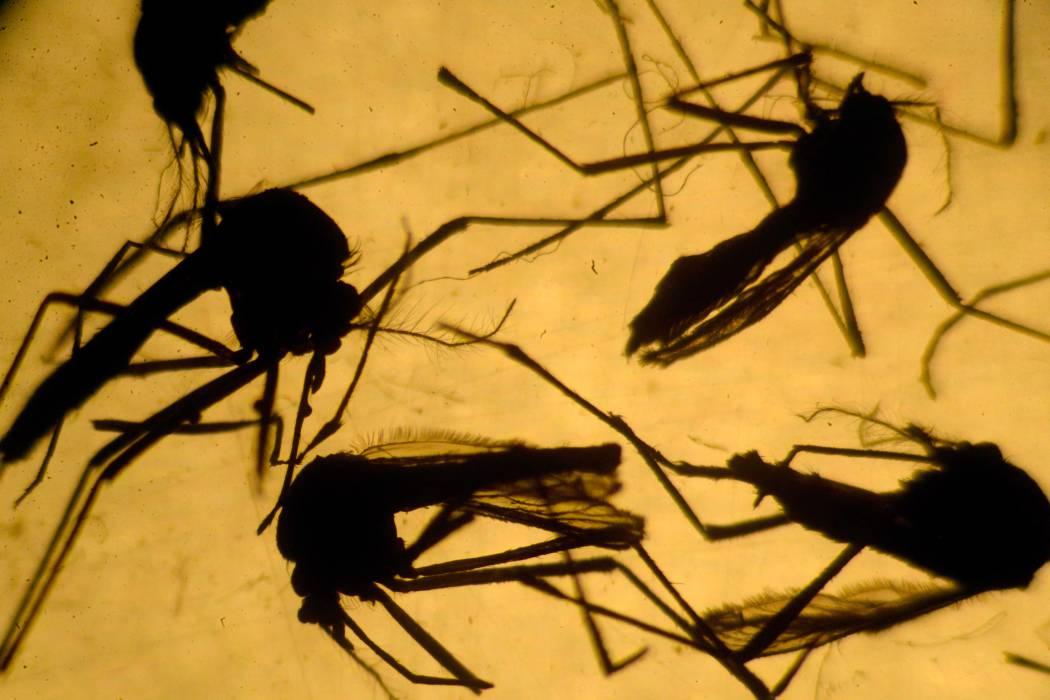 Todas las comunas de Bucaramanga tienen pacientes sospechosos de zika