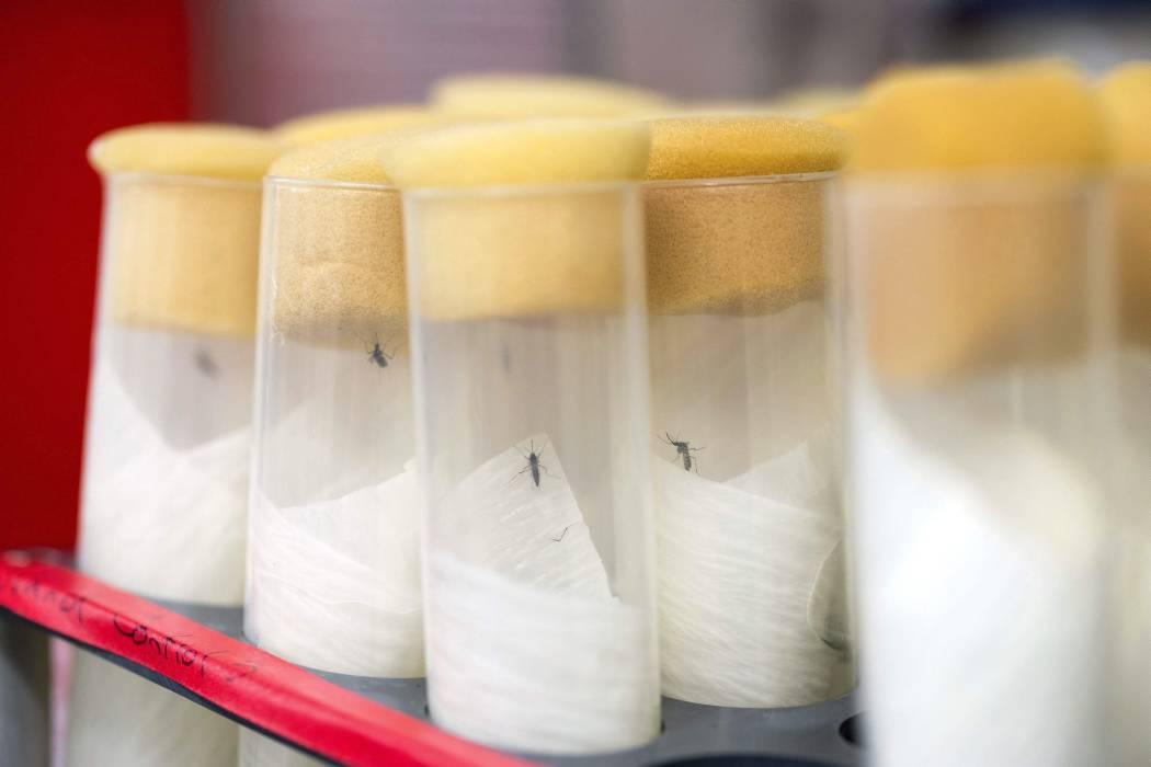 En Barranquilla comienza proyecto mundial de investigación sobre el zika