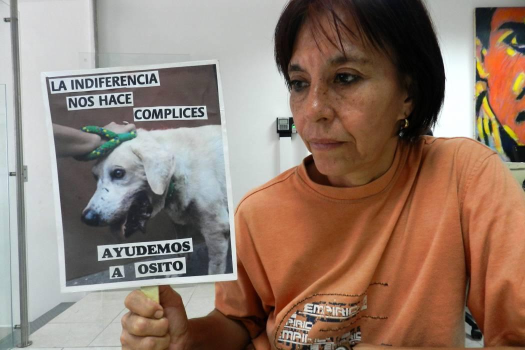 Animalistas advierten sobre maltrato animal
