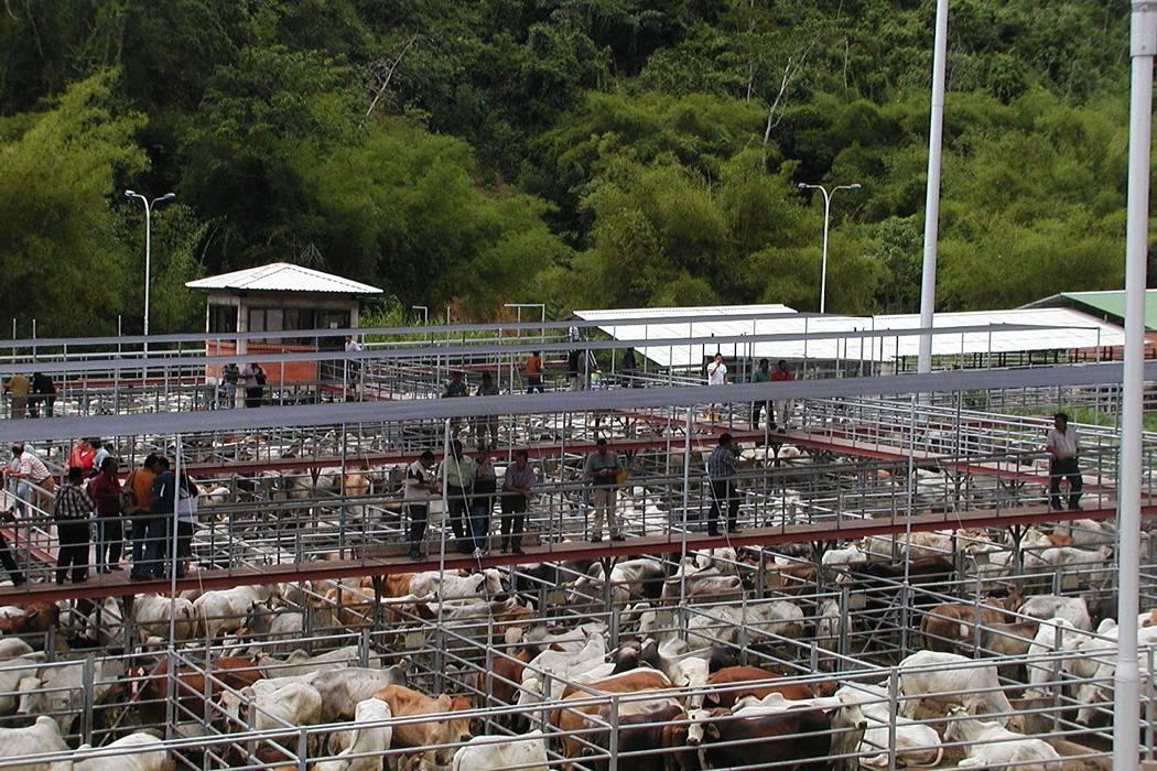Asofrigoríficos pide que se frene la exportación de bovinos en pie
