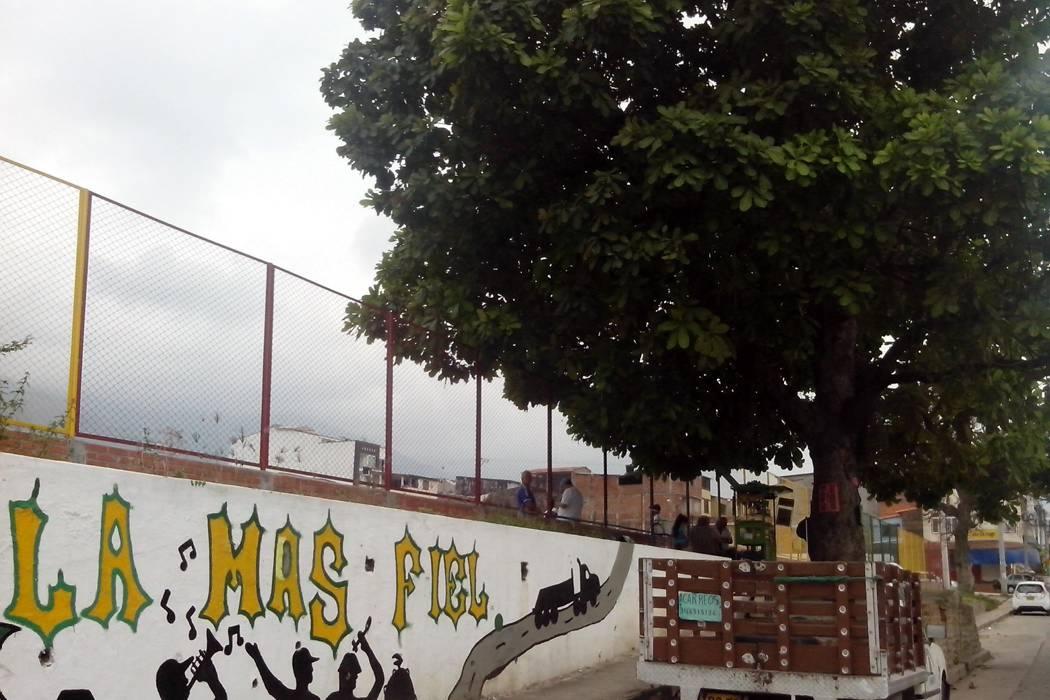 Advierten riesgos por árboles en la Municipal