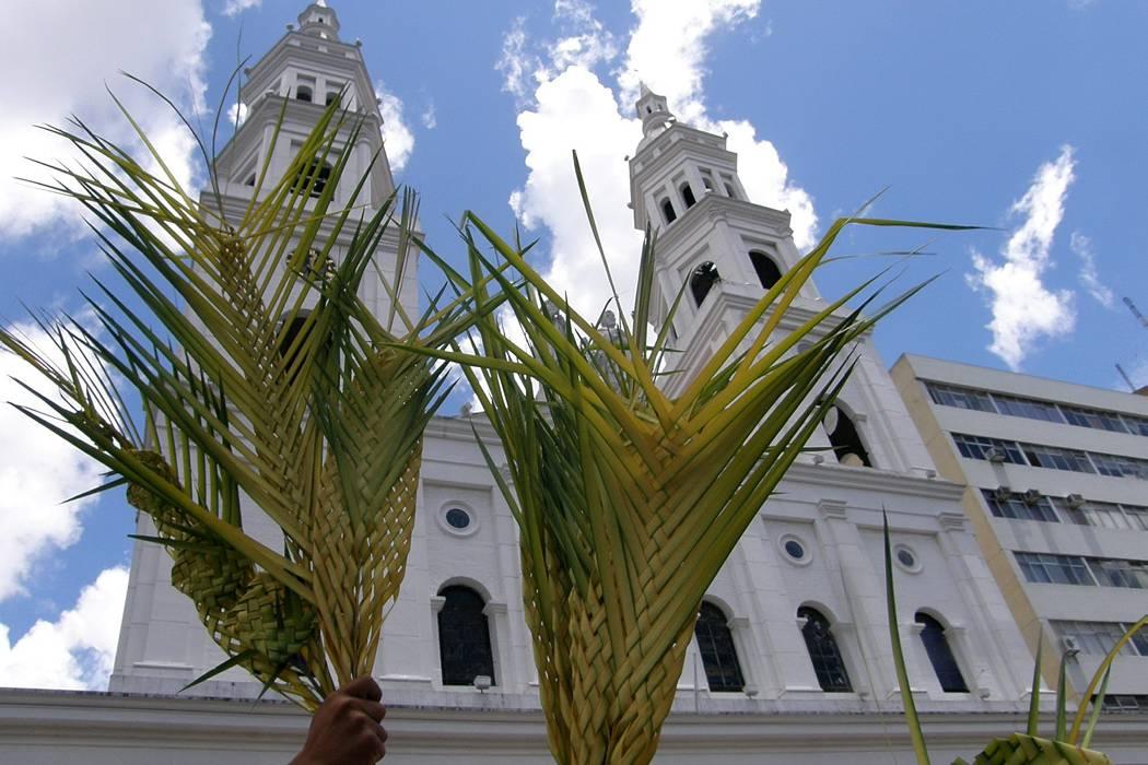 Alerta para evitar uso de palma de cera en Semana Santa en Bucaramanga