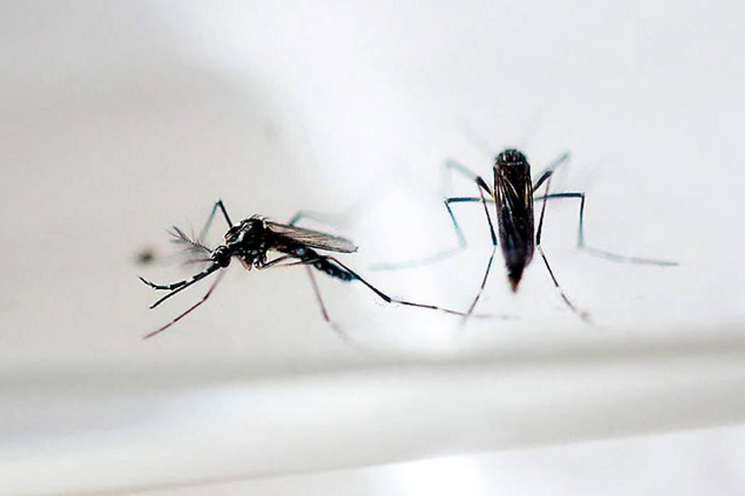 Confirman que el zika sí provoca desórdenes neurológicos y malformaciones