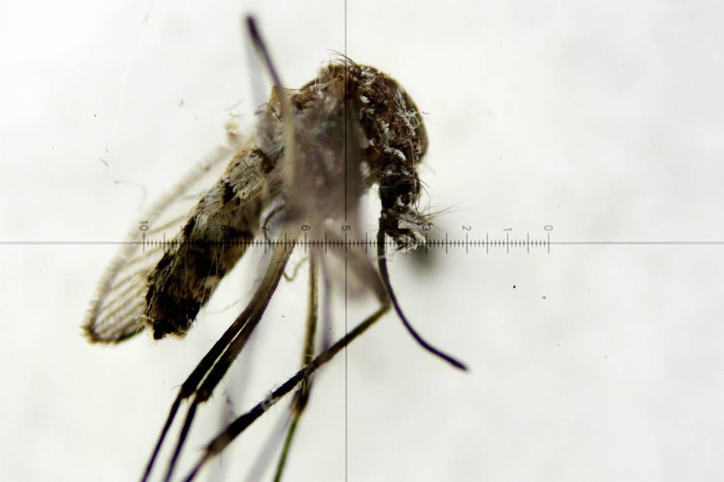 La vacuna contra el Zika sólo estaría lista en tres años