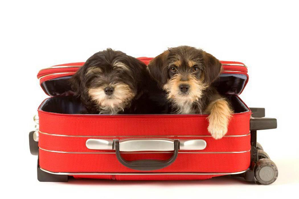 Cinco claves para que los viajes no afecten a las mascotas