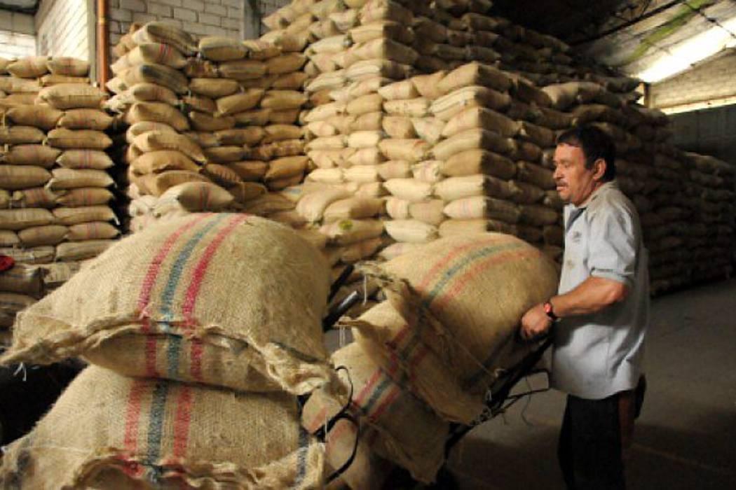 Producción de café subió 8 % en lo que va de este año, pero caen las exportaciones