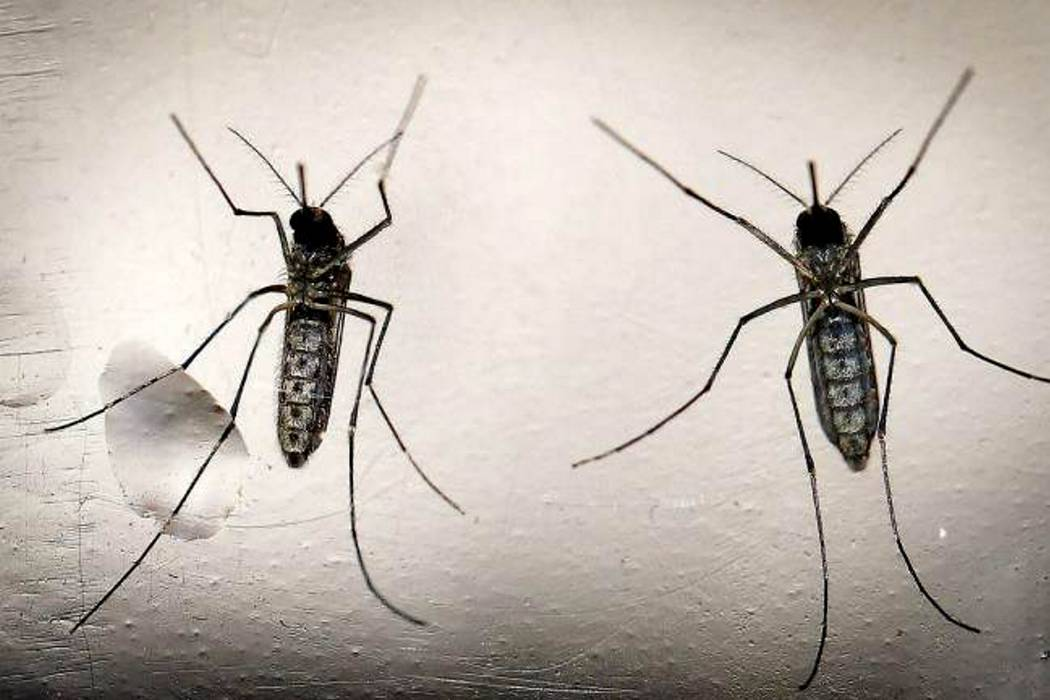 Cada semana se reportan 24 nuevos casos de zika
