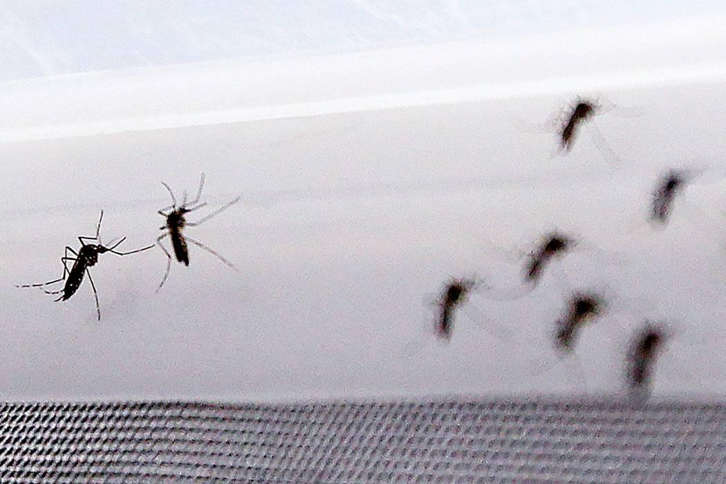 El virus zika seguirá siendo un grave problema para los santandereanos