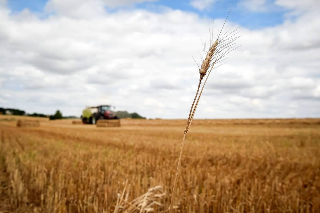 La producción de cereales disminuirá  este año en Venezuela, según la FAO