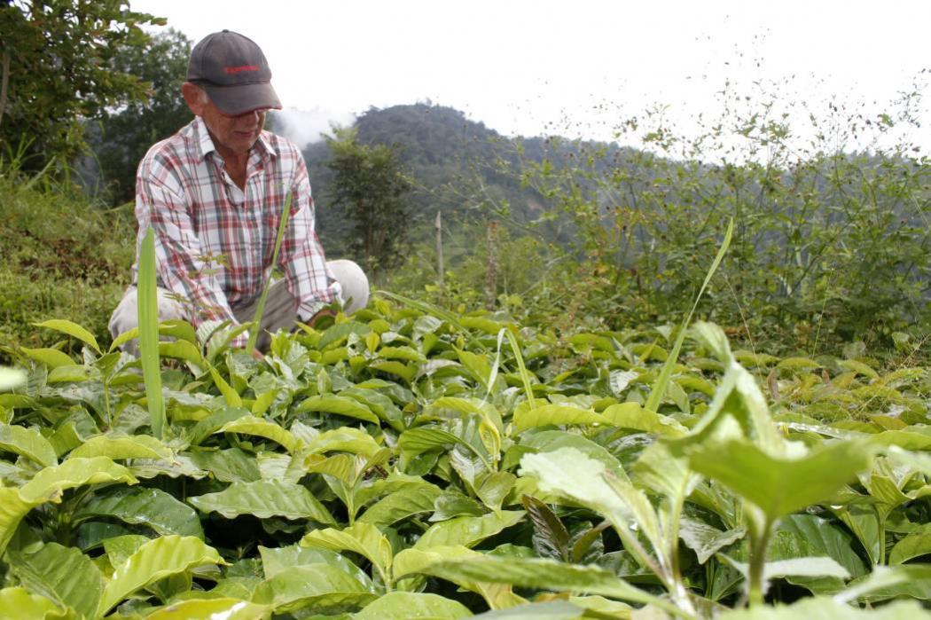 España ofrece a la FAO apoyo para plan de desarrollo agrícola en Colombia