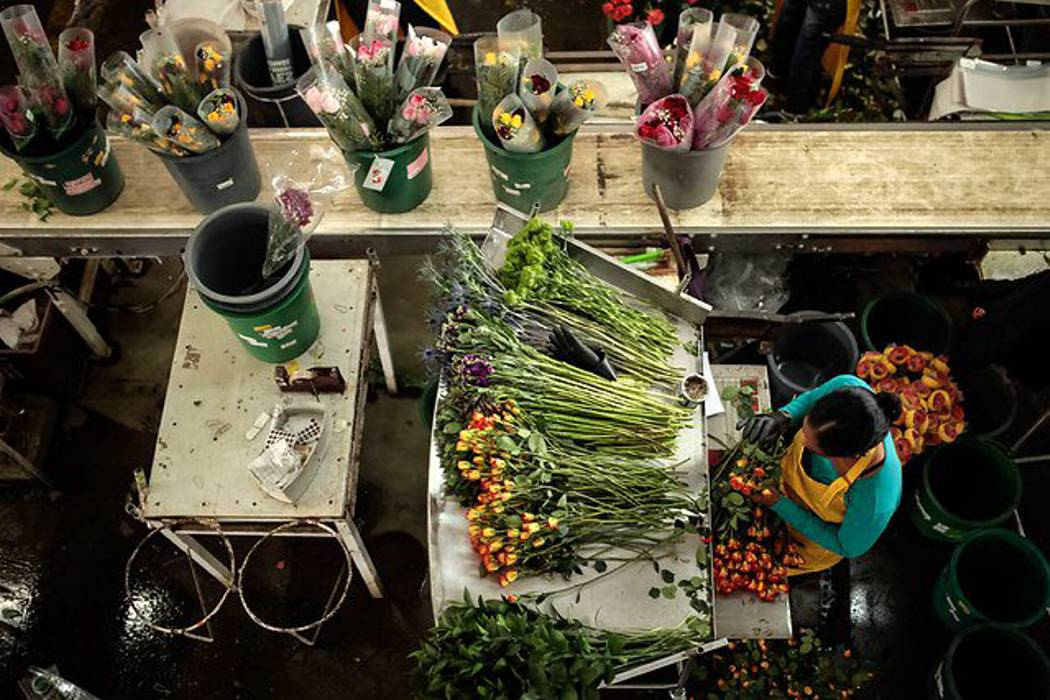 Informalidad laboral en Colombia llega al 70% en el área urbana y 88% en la rural