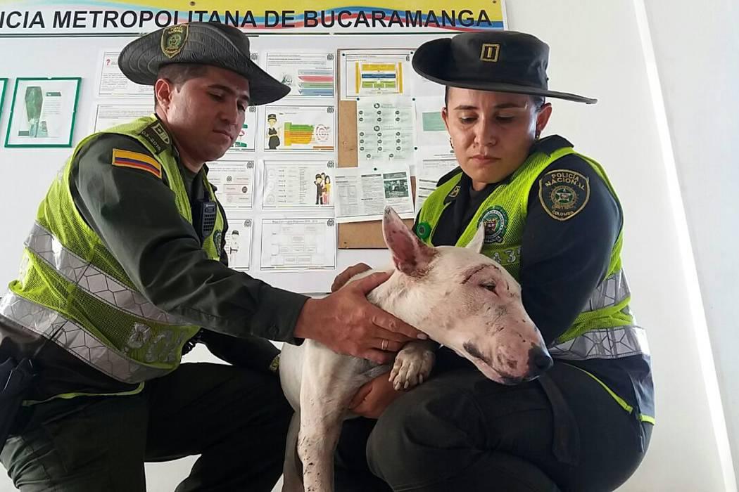 Policía investiga ataque que sufrió un perro en Lebrija