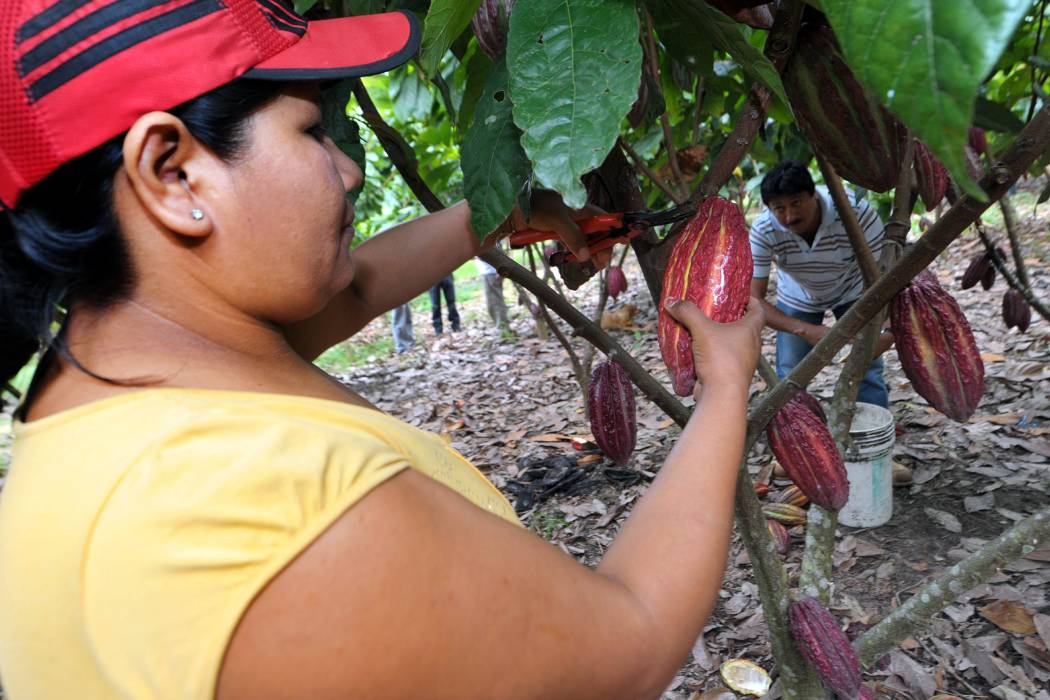 Buenas Prácticas Agrícolas para cultivos de cacao y cítricos del Sena y Corpoica