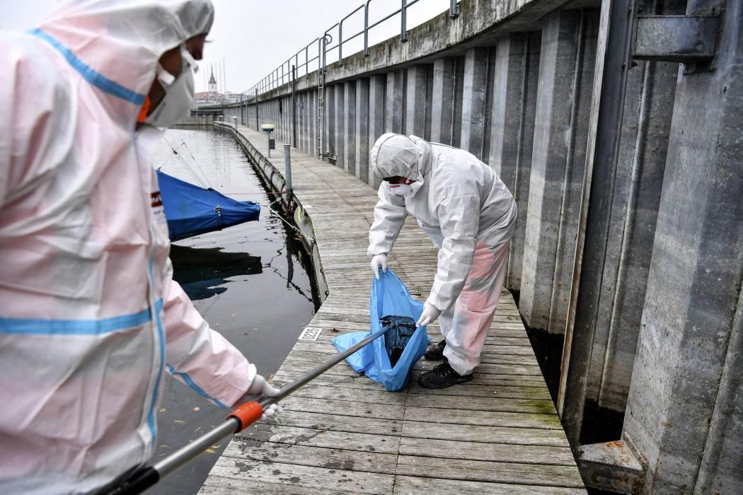 OMS advierte que la amenaza de pandemia de gripe sigue siendo real