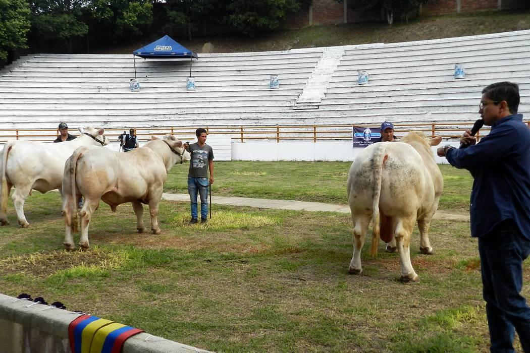 Promueven la raza Charolais en la VII Exposición Nacional