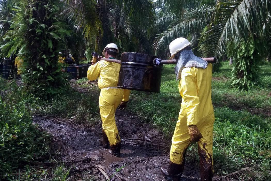 Continúa recuperación de hectáreas afectadas