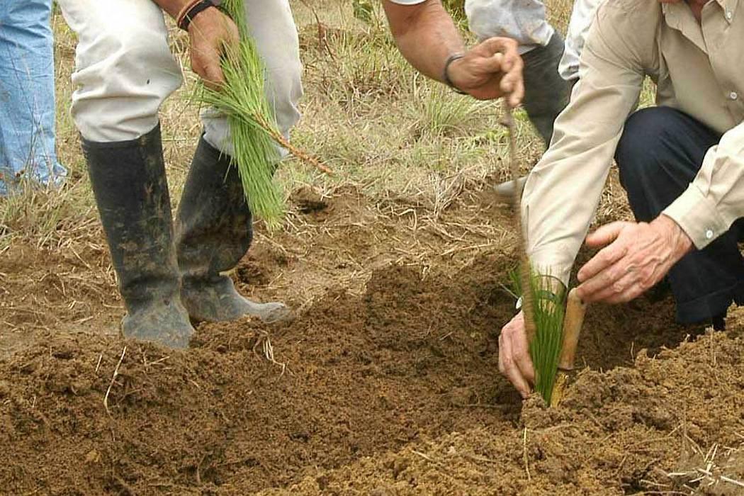 22% de tierras son aptas para el agro en Santander, pero ya copa el 62%