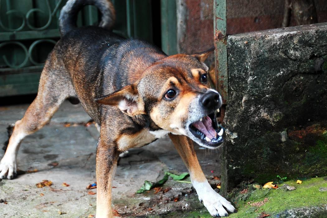 Cada semana ocurren más de 27 ataques de mascotas en Bucaramanga