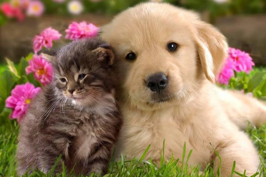 Desde el próximo miércoles se realizará censo canino y felino en Bucaramanga