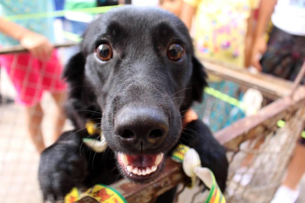 Este domingo se realiza 'tapatón' y jornada de adopción animal en Bucaramanga