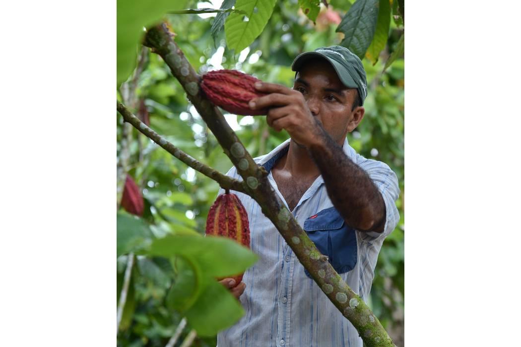 El proyecto Sancacao intervino 1.500 hectáreas