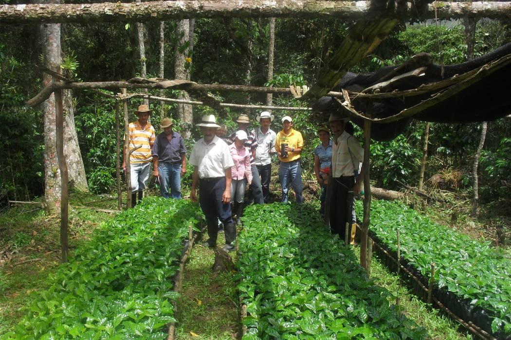 Federación de Cafeteros firmó convenio para proyectos productivos agrícolas