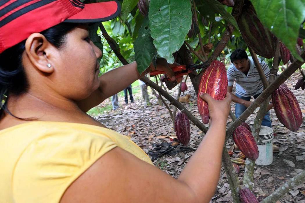 Se hundió el proyecto del Parque del Cacao
