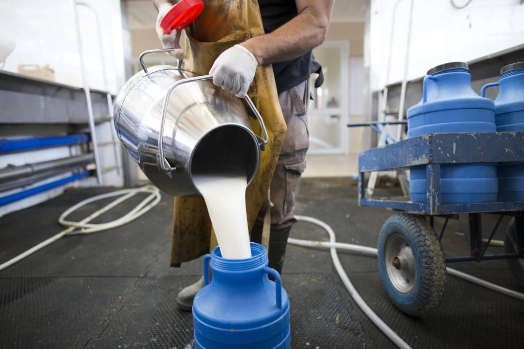 Por malos precios, la crisis ronda a lecheros