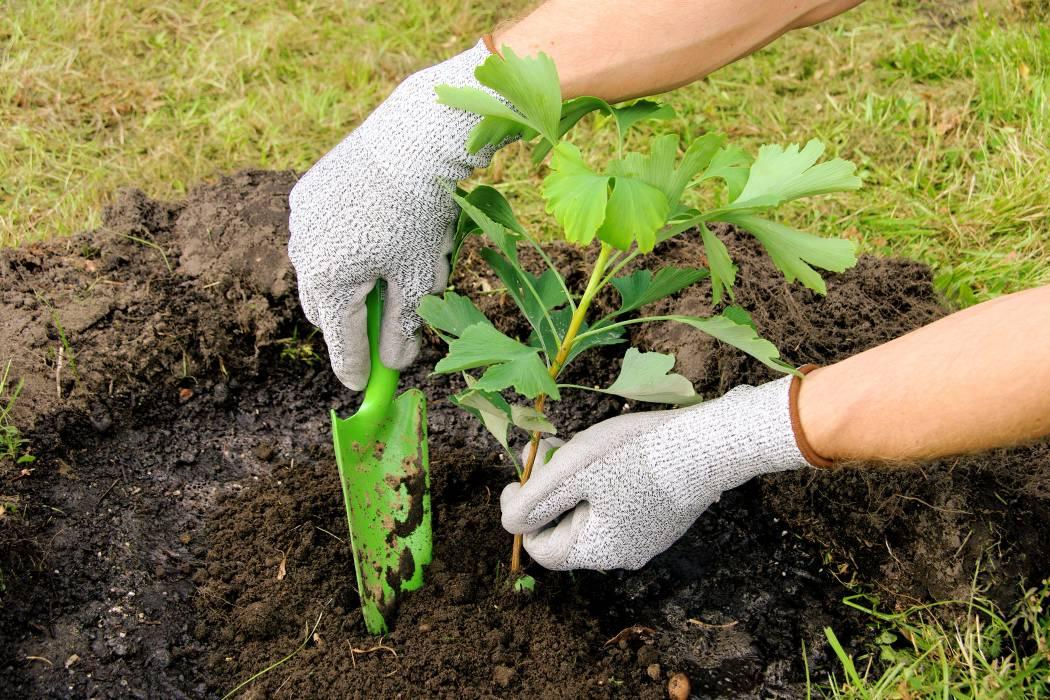 ¿Quiere sembrar árboles en Bucaramanga? Este evento le interesa
