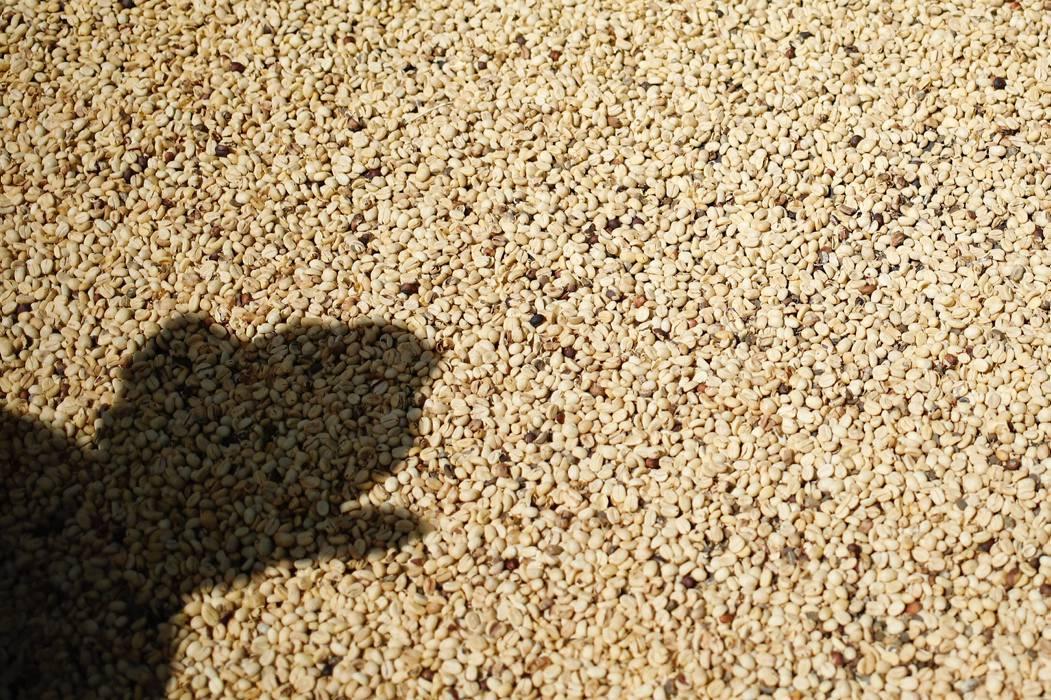 Foro Mundial de Café irá en línea para productores