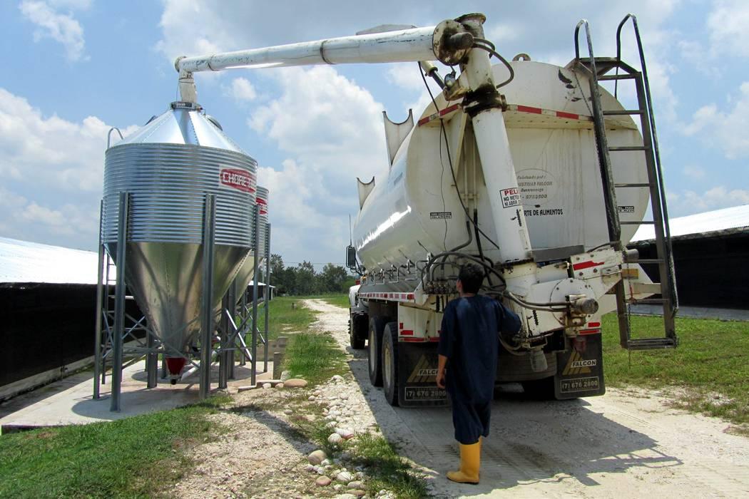 Avicultura sigue volando: crece 4,9% en el semestre