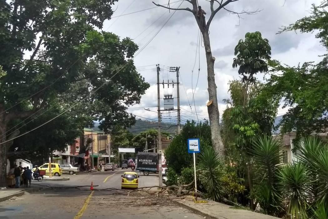 Comunidad de Cabecera taló árbol para evitar una tragedia