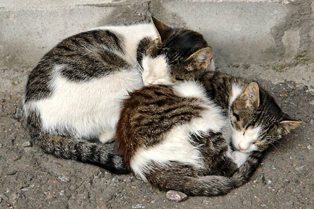 Comunidad denuncia mortandad de felinos