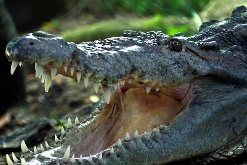 Estos son los seis reptiles en riesgo de extinción en Santander