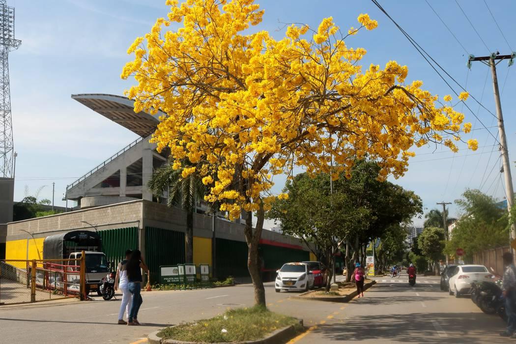 Imágenes de Bucaramanga vista desde sus árboles