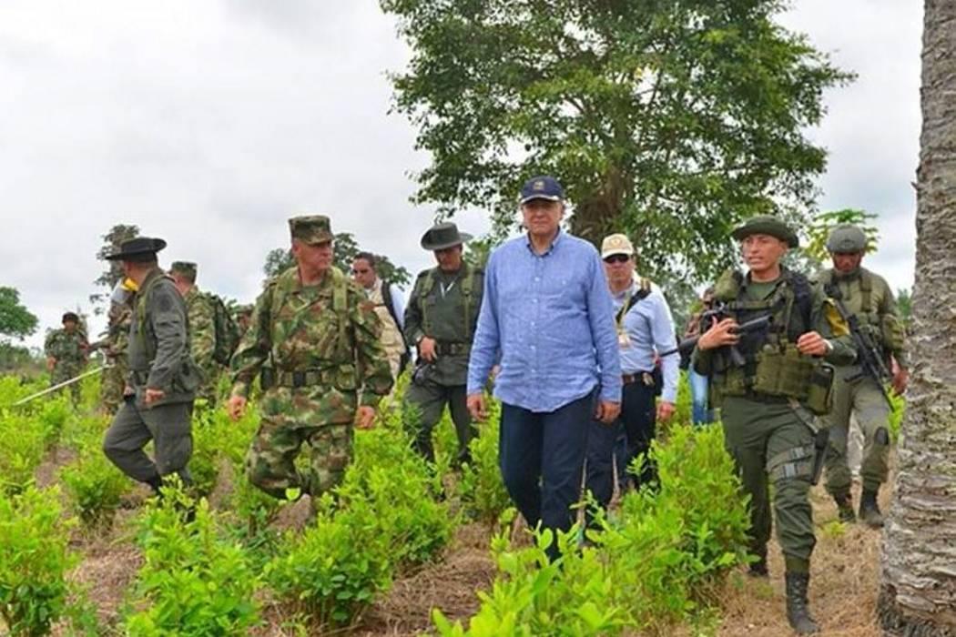 Conflicto en Tumaco por cultivos ilícitos podría ocurrir en otros 10 municipios del país