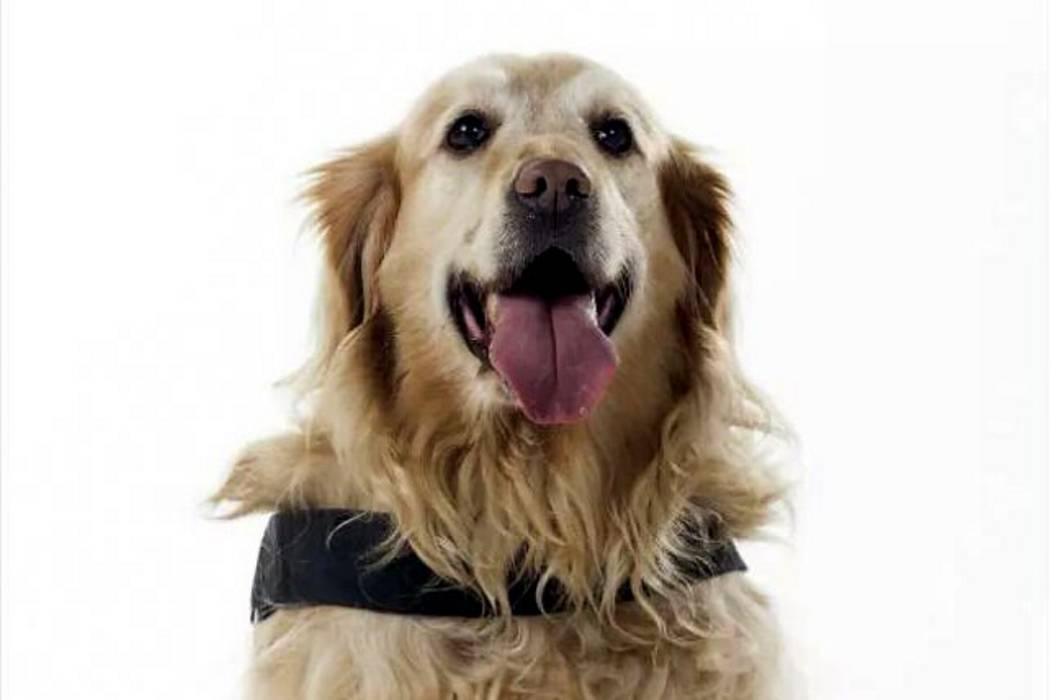Falleció Tina, la única perra teniente salvavidas de Colombia
