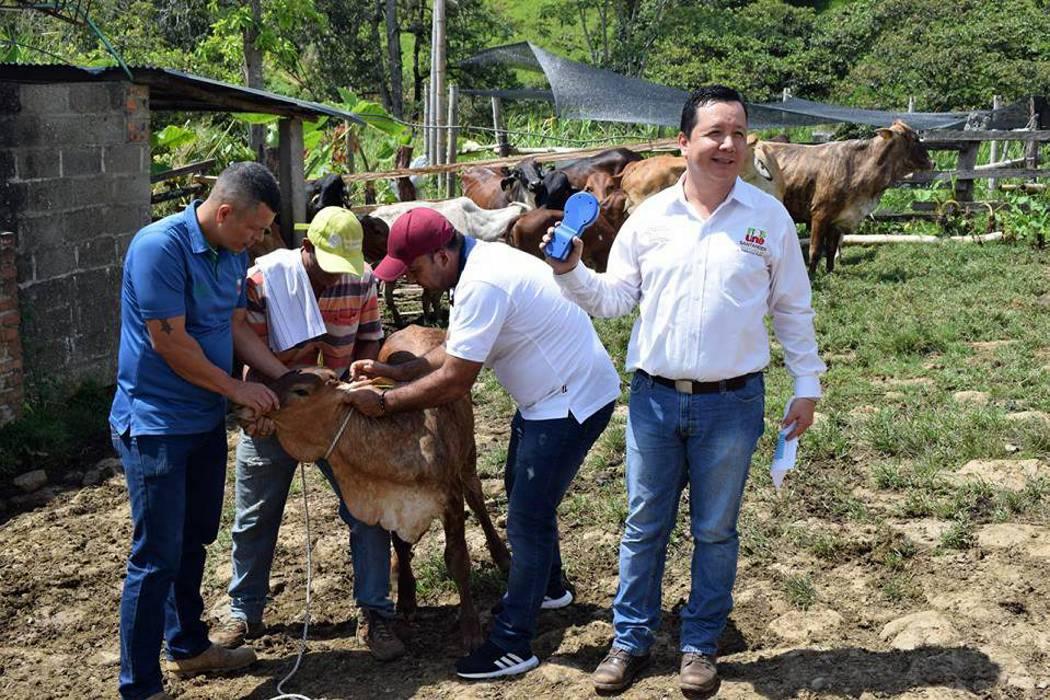 Los ganaderos de Charalá y Coromoro fueron beneficiados con proyecto de mejorameinto genético