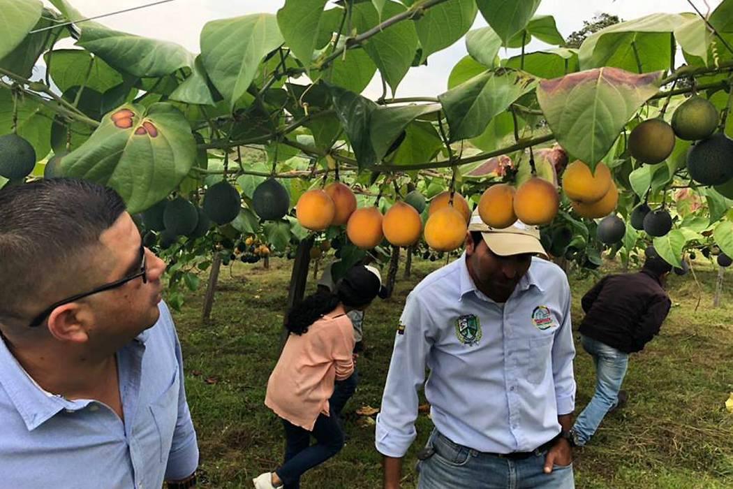 Promueven cultivos promisorios en Gámbita