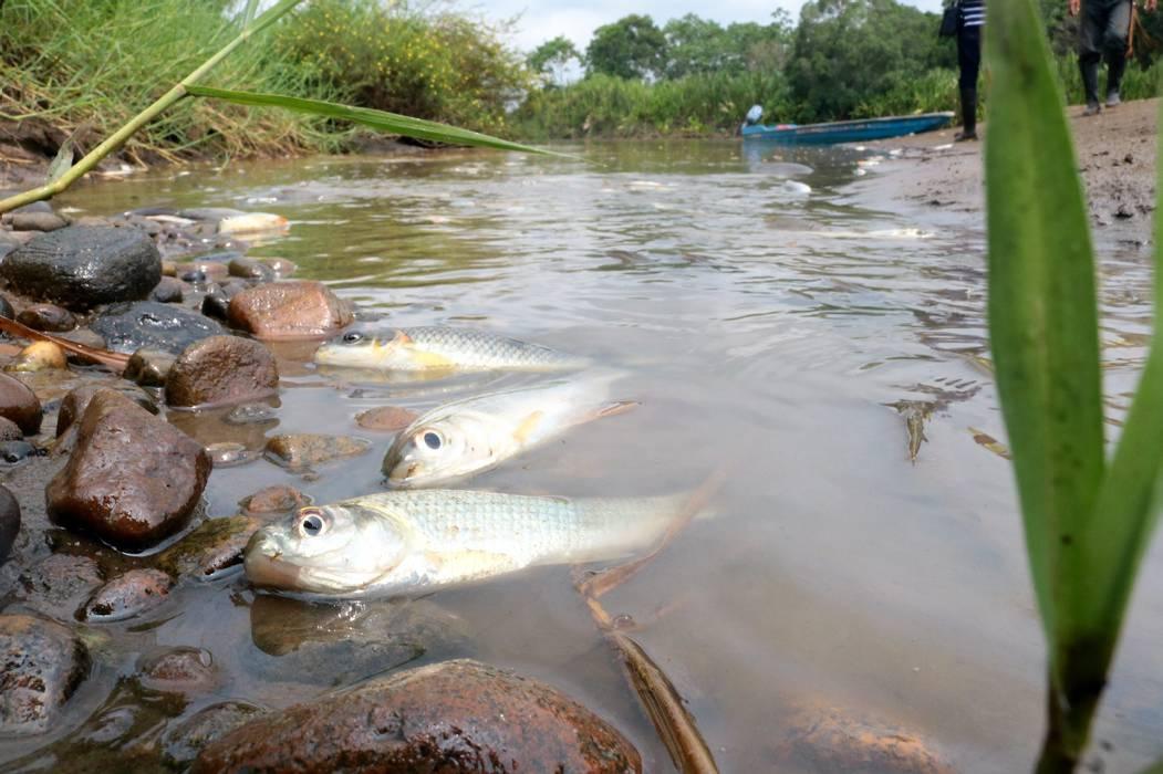 Pescadores están en crisis en La Fortuna por derrame de crudo