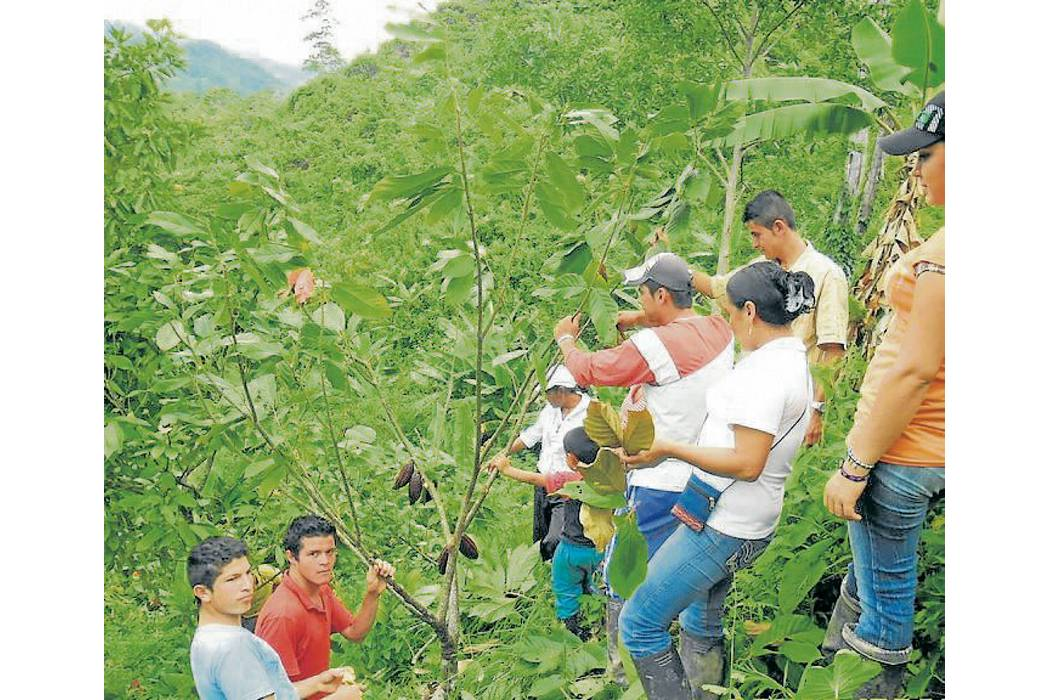 Contrateños, capacitados por el Sena en agricultura