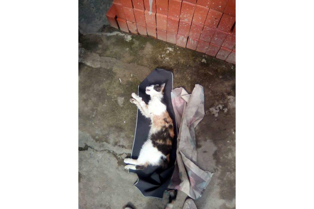 Seis felinos han sido envenenados en San Gil