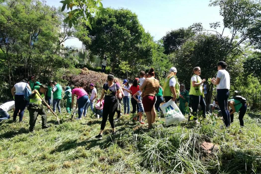 Cdmb y la comunidad sembrarán 400 árboles