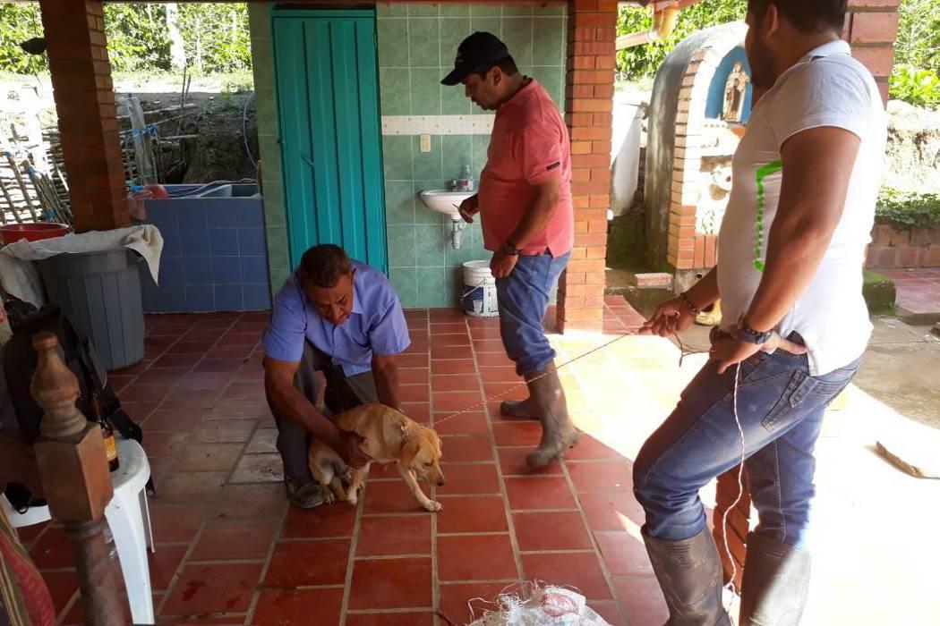 Promueven esterilización de caninos en Socorro