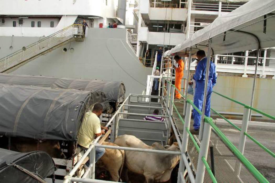 Dólar barato y escasez de bovinos frenaría la exportación de carne